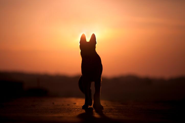 Att ta farväl av sin hund